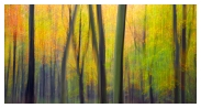 slides/Woodland Art.jpg south downs national park, autumn,beech trees,colours,movement. Woodland Art