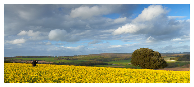 Simon photographing a beautiful field of Oil Seed Rape. South Downs National Park